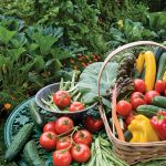 Organic Gardening. Seven Reasons Why You Should Care.