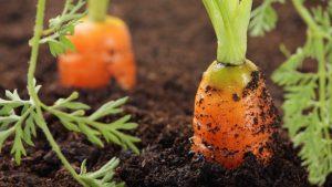 organic gardening 2